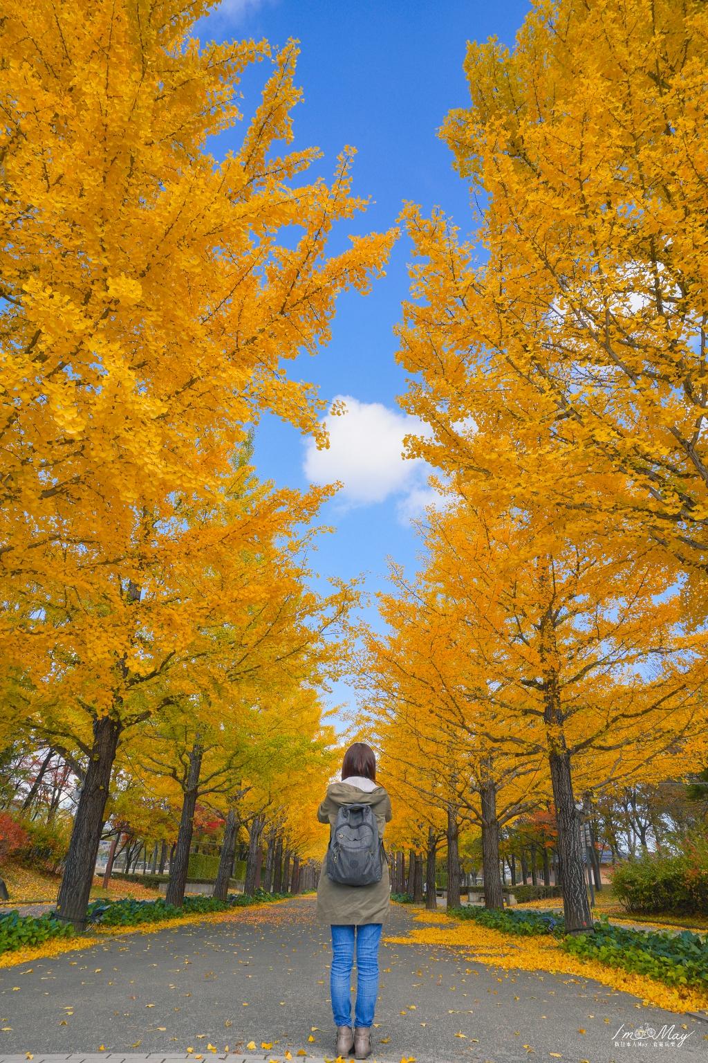 福島 | 漫步在璀璨金黃的銀杏大道下「あづま総合運動公園のイチョウ並木」(吾妻綜合運動公園) | 超過百顆銀杏樹排列而成的絕美步道、福島秋季景點 @偽日本人May.食遊玩樂