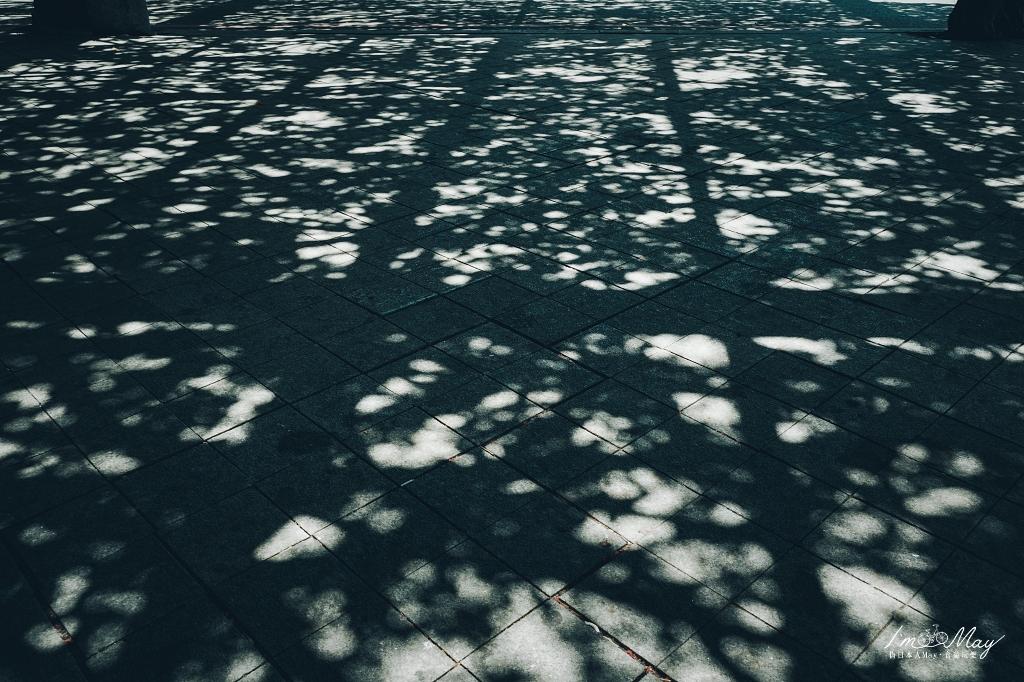 澎湖、白沙   盤根錯節的三百年樹齡老榕樹「通梁古榕」、觀光客必打卡的「澎湖跨海大橋」、人氣排隊冰店「易家仙人掌冰」 @偽日本人May.食遊玩樂
