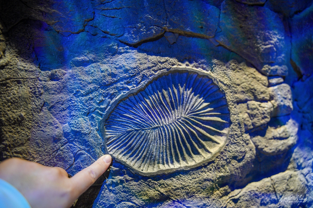 澎湖、西嶼 | 壯闊海蝕洞的超火紅IG打卡景點「鯨魚洞」、重返侏羅紀的動態擬真恐龍「小門地質探索館」| 小門嶼必訪景點、北環景點 @偽日本人May.食遊玩樂