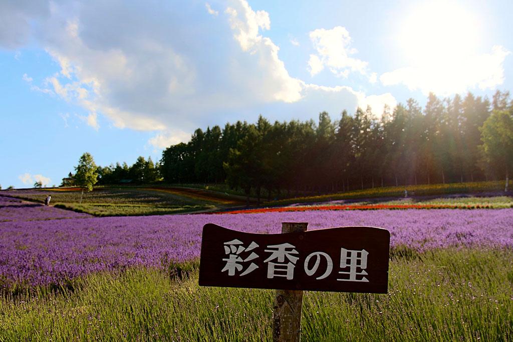 [北海道] 中富良野『彩香之里』_整個農場都是我們的遊樂場啊! (大誤) @偽日本人May.食遊玩樂