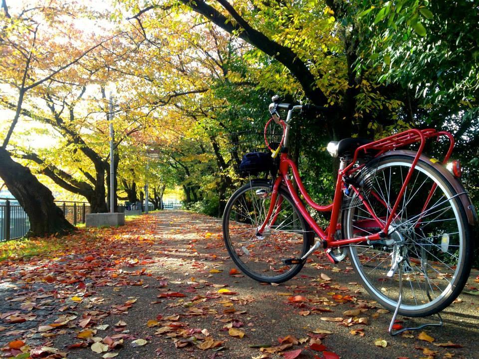 [京都] 跟著May在京都騎腳踏車, 一起當個偽京都人吧(教你如何在京都騎腳踏車) @偽日本人May.食遊玩樂