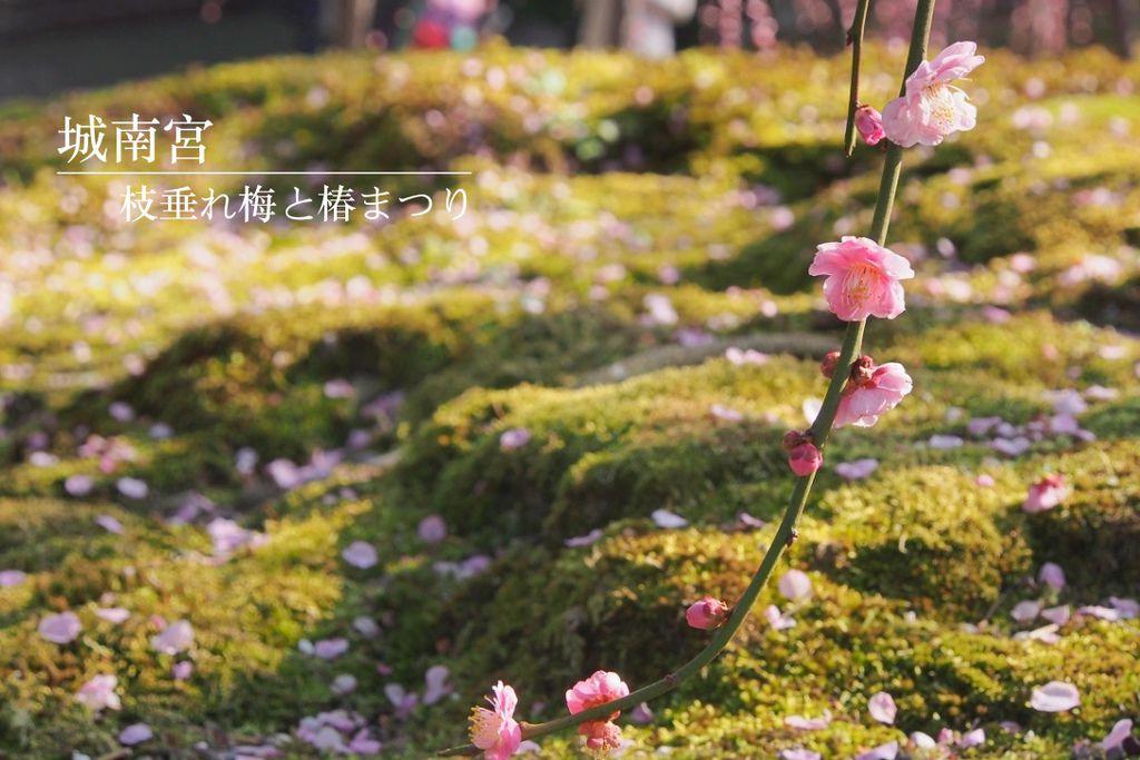 [京都] 隨處飄散梅花氣味之『城南宮』枝垂れ梅と椿まつり (京都賞梅景點) @偽日本人May.食遊玩樂
