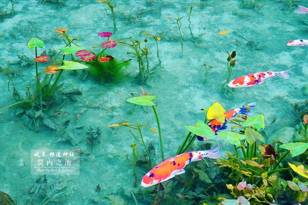 日本絕景攝影 | 遠赴岐阜縣根道神社,一睹如同畫作「莫內之池」的絕景 | 為了一張照片你願意花多時間?  (建議自駕前往/附大眾交通工具方式) @偽日本人May.食遊玩樂