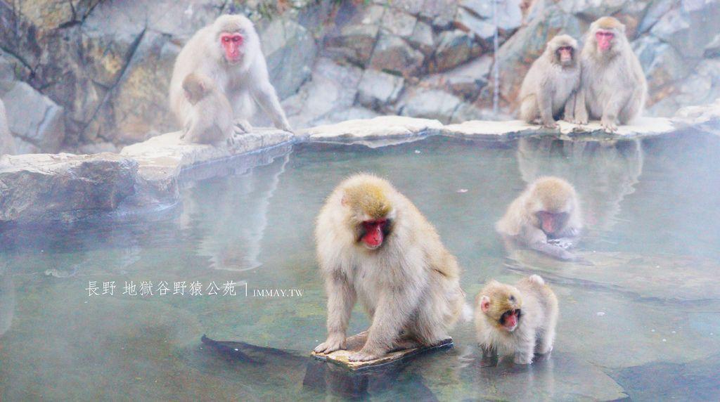 長野 | 來地獄谷野猿公苑看猴子泡湯真的好療癒啊。交通攻略及優惠票券、周邊景點、建議住宿 @偽日本人May.食遊玩樂