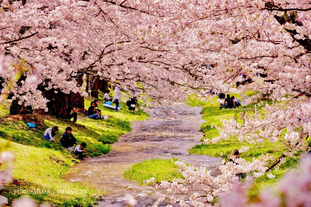福島 | 春天來了 ! 綿延河畔兩旁的櫻花並木、享受漫步其中的浪漫時光 | 豬苗代町 觀音寺川 @偽日本人May.食遊玩樂