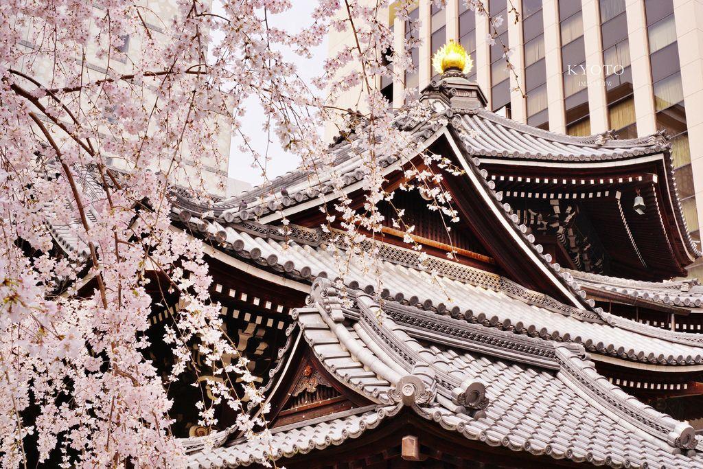京都 | 座落水泥叢林裡的千年佛寺、京都的中心點「六角堂」| 星巴克特色概念店、有著浪漫傳說的御幸櫻、俯瞰全景地點公開 @偽日本人May.食遊玩樂
