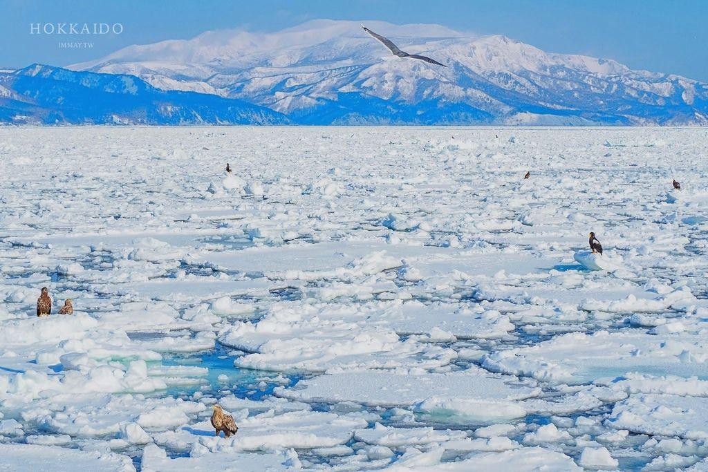 北海道、道東 | 冬季就去北海道看流冰吧 ! 在國境之東,欣賞流冰與野生動物的合奏曲 | 流冰船預約方式、拍攝技巧與雪地穿著建議 @偽日本人May.食遊玩樂